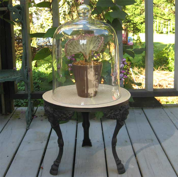 "Dome Home Interiors: 16"" Cloche- Glass Dome- Terrarium- Display- Garden"